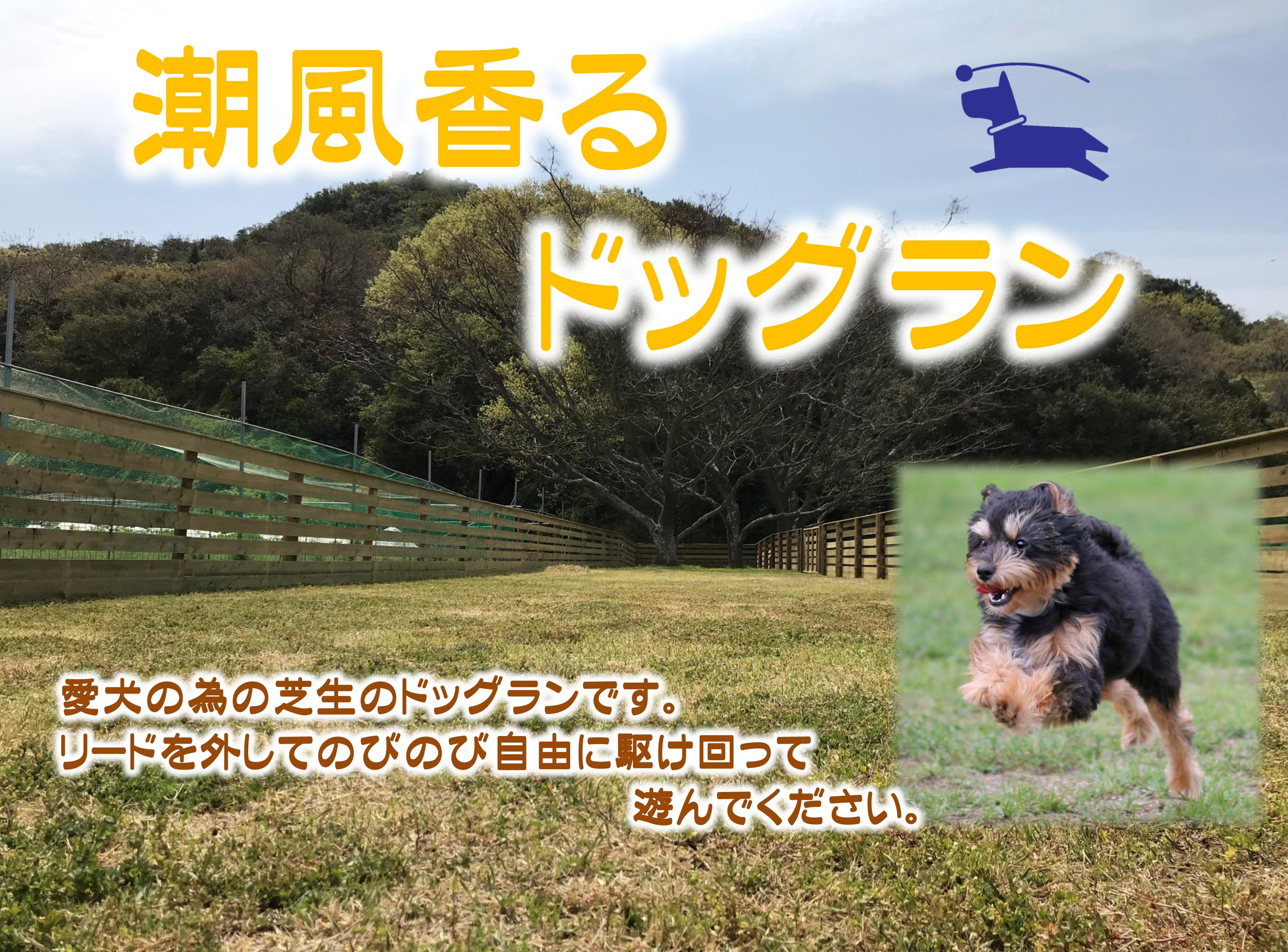 愛犬のための芝生のドッグランです。リードを外してのびのび自由に駆け回って遊んでください。